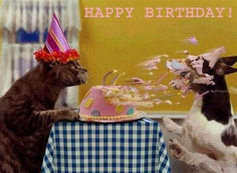 happy birthday cat dog Facebook comments and graphics