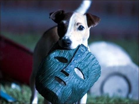 Fascinating Facts About Dog Movie Stars You Probably Don't