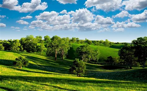 Spring Landscape Green Wheat Field, Trees, Blue Sky With