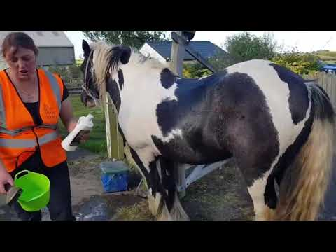 Feather mites on horses   Pets4Homes