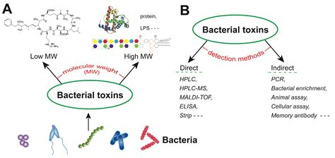 Toxins | Free Full-Text | Recent Developments in Antibody