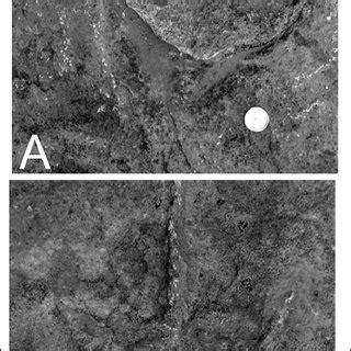(PDF) VERTEBRATE TRACE FOSSILS FROM ARIZONA WITH SPECIAL