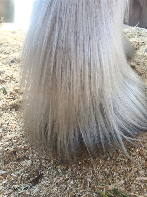 Darkmoor Shire Horse Stud   How to diagnose and treat