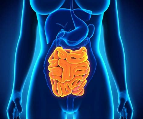 From Mouth to Colon: The Journey of Your Digestive Enzymes